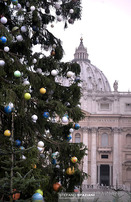 Christmas tree in St. Peter square at the Vatican.December 9, 2016.