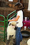 Young girl tending to her sheep at Cheshire Fair in Swanzey, New Hampshire USA