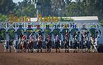 "September 26, 2015: The break of the Breeders' Cup ""Win and You're In"" Zenyatta Stakes at Santa Anita Park in Arcadia, California. Zoe Metz/ESW/CSM"