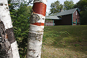 Birch trees at Forest Lake State Park in Whitefield, New Hampshire