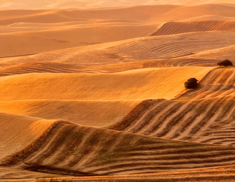 Close view of harvested land and growing wheat. Near Colfax, Washington.