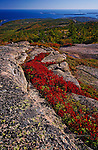 Looking East from Cadillac Mountain, Acadia National Park, Maine.  Available in sizes up to 30 x 45 inches.