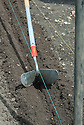 """Using a ridger to create a shallow trench for planting out or """"dibbing in"""" young leek plants, mid June."""