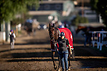 OCT 25: Breeders' Cup Juvenile Fillies entrant Donna Veloce, trained by Simon Callaghan, at Santa Anita Park in Arcadia, California on Oct 25, 2019. Evers/Eclipse Sportswire/Breeders' Cup