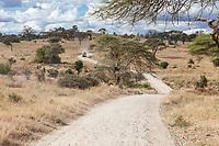 Tanzania. Tarangire National Park, Road Scenic.