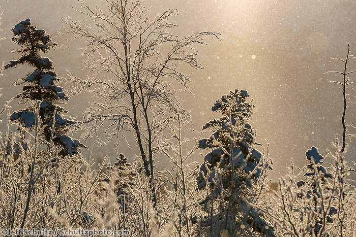 Winter landscape of Hoarfrost falling and on trees and shrubs at Potters Marsh State Game refuge Winter Southcentral, Alaska<br /> <br /> <br /> Photo by Jeff Schultz/  (C) 2020  ALL RIGHTS RESERVED