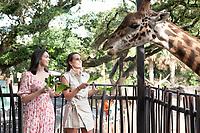 2021-05-29 Houston Zoo Flock Giraffes