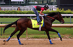 LOUISVILLE, KY - APRIL 23: Mo Tom (Uncle Mo x Caroni, by Rubiano) exercises on the track at Churchill Downs, Louisville KY in preparation for the Kentucky Derby. Owner G M B Racing, trainer Thomas A. Amoss. (Photo by Mary M. Meek/Eclipse Sportswire/Getty Images)