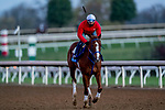 November 4, 2020: King Fury, trained by trainer Kenneth G. McPeek, exercises in preparation for the Breeders' Cup Juvenile at Keeneland Racetrack in Lexington, Kentucky on November 4, 2020. Scott Serio/Eclipse Sportswire/Breeders Cup