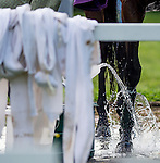 LOUISVILLE, KY - MAY 02: Nyquist, trained by Doug O'Neill and owned by Reddam Racing LLC, gets water poured on his legs after walking two miles during morning workouts for the Kentucky Derby and Kentucky Oaks at Churchill Downs on May 2, 2016 in Louisville, Kentucky. (photo by John Voorhees/Eclipse Sportswire/Getty Images)