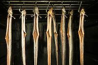 """Europe/France/Pays de la Loire/49/Maine-et-Loire/ Montjean sur Loire: Eric Lassalle pécheur professionnel fume ses anguilles à la CUMA """"L'anguille argentée"""""""