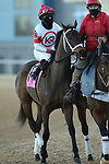 March 6, 2021: Coach (8) with jockey Martin Garcia aboard during the Honeybee Stakes (G3) at Oaklawn Racing Casino Resort in Hot Springs, Arkansas on March 6, 2021. Justin Manning/Eclipse Sportswire/CSM