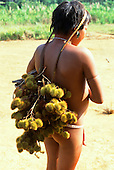 Roraima, Brazil. Yanomami girl with red face paint carrying a bundle of spiny fruits slung from her head on her back.