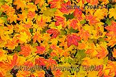 Tom Mackie, STILL LIFE STILLEBEN, NATURALEZA MORTA, photos+++++,GBTM170523-1,#i#, EVERYDAY ,leaves