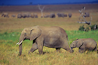 African Elephant cow and calf.  Masai Mara, Kenya.