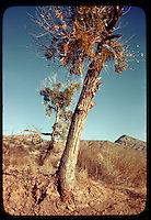 Arizona by Don Mueller