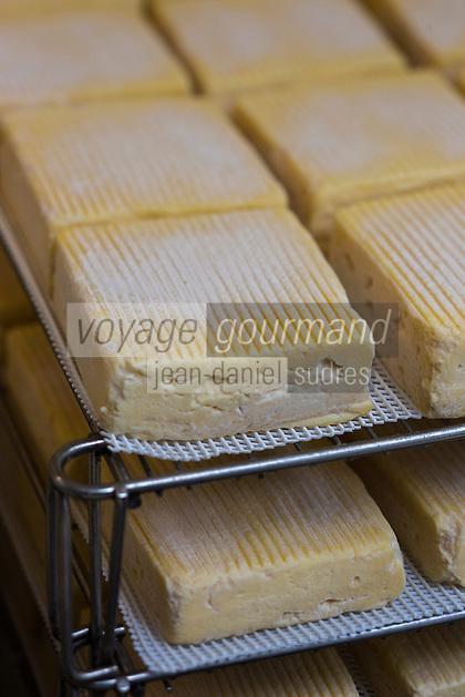 France, Calvados (14), Pays d' Auge, Saint-Philbert-des-Champs,  Fabrication du Pont-l'évêque AOP , affinage des fromages en cave  chez Françoise et Jerôme Spruytte // France, Calvados, Pays d' Auge, Saint Philbert des Champs, Pont l'Évêque cheese making , Françoise et Jerôme Spruytte, Pont l'Évêque cheese producers, cheese ripening cellar