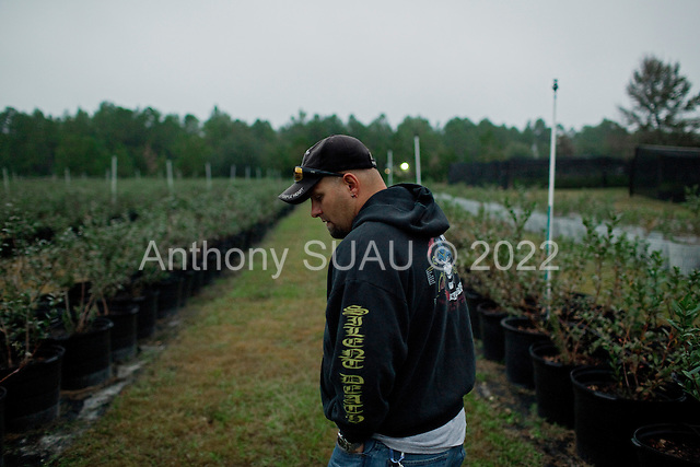 Jacksonville, Florida<br /> November 5, 2013<br /> <br /> Veteran's sustainable farm founded by Purple Heart veteran Adam Burke and managed by Afghan and Iraqi veteran Steve Ellseberry.<br /> <br /> Army veteran Steve Ellseberry walks amongst the blueberry plants at sunrise.