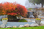 Waterfall water feature and gorgeous lace leaf maple in private garden professionally landscaped.