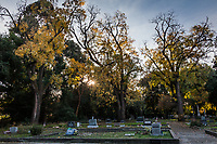 A final splash of autumn yellow clings tenuously to the limbs of trees standing over graves at the Pioneer Cemetery, part of the Heritage  Park in Dublin, California.