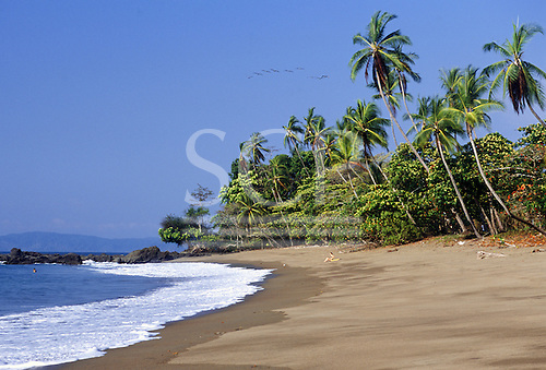 Marenco, Osa Peninsula, Costa Rica. Perfect unspoilt palm fringed beach with one girl sunbathing.