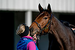 November 4, 2020: Donjah, trained by trainer Henk Grewe, gets some love after a bath after exercising in preparation for the Breeders' Cup Turf at Keeneland Racetrack in Lexington, Kentucky on November 4, 2020. Scott Serio/Eclipse Sportswire/Breeders Cup
