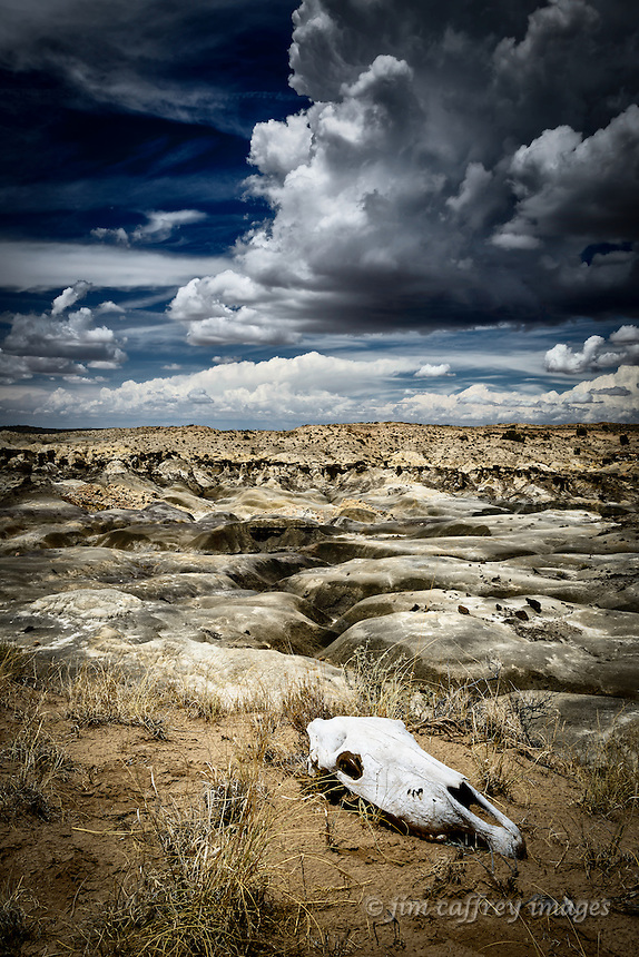 A horse skull rests on the edge of the De Na Zin Wilderness in New Mexico's San Juan Basin.