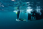 Diver lifts make getting aboard easy
