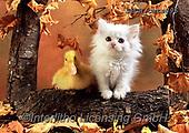 Xavier, ANIMALS, REALISTISCHE TIERE, ANIMALES REALISTICOS, cats, photos+++++,SPCHCATS896,#a#, EVERYDAY