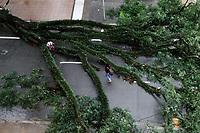 28.03.2018 - Queda de árvore na Alameda Lorena em SP