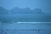 Europe/France/Bretagne/29/Finistère/Dinan: La pointe de Dinan depuis l'anse de Dinan