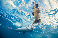 JoJo, a wild sociable bottlenose dolphin, Tursiops truncatus, or ambassador dolphin, plays with dog friend Toffee, a golden labrador, Providenciales, Turks and Caicos Islands, Caribbean Sea, (W. Atlantic Ocean)