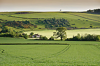 Cereal fields at Carhampton, Somerset.
