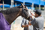 DEL MAR,CA-AUGUST 17: Arrogate and assistant trainer,Jim Barns, at Del Mar Race Track on August 17,2017 in Del Mar,California (Photo by Kaz Ishida/Eclipse Sportswire/Getty Images)