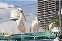 Sunshine Aquarium introduces new attraction featuring penguins