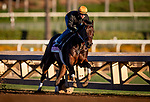 OCT 25:  Breeders' Cup Juvenile Fillies entrant Donna Veloce, trained by Simon Callaghan, under Flavien Prat works at Santa Anita Park in Arcadia, California on Oct 25, 2019. Evers/Eclipse Sportswire/Breeders' Cup