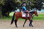 LOUISVILLE, KY -APR 25: Blamed goes to the track to work out for the Kentucky Oaks at Churchill Downs, Louisville, Kentucky. (Photo by Mary M. Meek/Eclipse Sportswire/Getty Images)