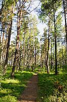 Wald bei Vaide, Lettland, Europa