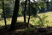 GERMANY, Teterow, forest / intakter Wald, Laubwald, Landschaftsschutzgebiet Saechsische Schweiz