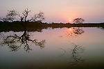 Phinda Resource Reserve, South Africa