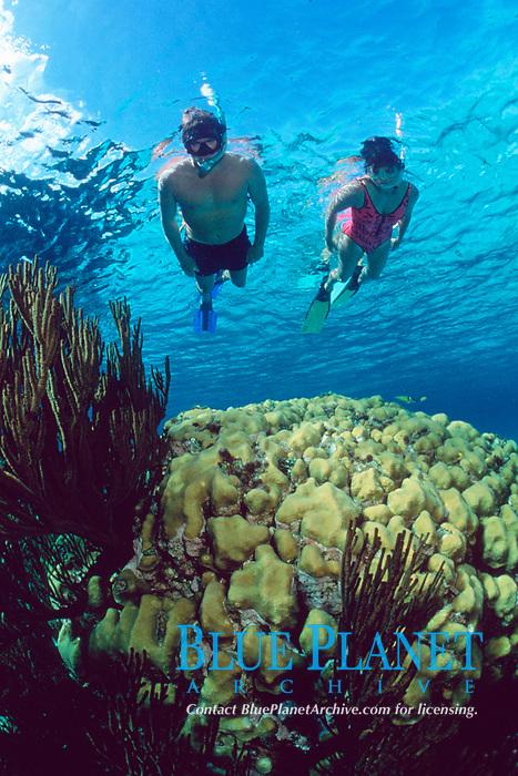 snorkelers over star coral, Montastrea annularis, Conception Island, Bahamas, Caribbean Sea, Atlantic Ocean