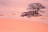 Natura in Namibia: dune di Sossuslvei