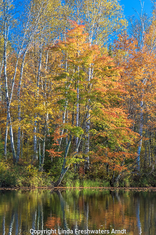 East fork of the Chippewa River in autumn