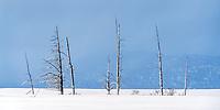 Winter scene in near Mcall, Idaho.