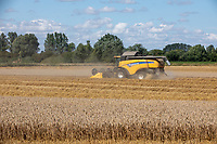 Harvesting wheat - Lincolnshire, August