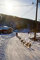 Bjornar Andersen on road into Ruby arriving @ checkpoint during 2006 Iditarod Race Interior Alaska Winter