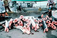 shark carcasses, shark finning is one of the world's most destructive fisheries, fins are collected for shark fin soup