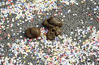 Switzerland. Canton of Neuchâtel. Neuchâtel. Grape Harvest Festival. Horses' dungs and confettis. © 2006 Didier Ruef