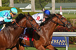 HALLANDALE BEACH, FL - FEB 10:  Heart to Heart #1 with Julien Leparoux on board wins the Gulfstream Park Turf Stakes GI at Gulfstream Park on February 10, 2018 in Hallandale Beach, Florida. (Photo by Liz Lamont/Eclipse Sportswire/Getty Images)