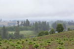 View of rainy Willamette Valley, Oregon,near the city of Silverton.  View from Drift Creek Road near Silver Falls State Park.